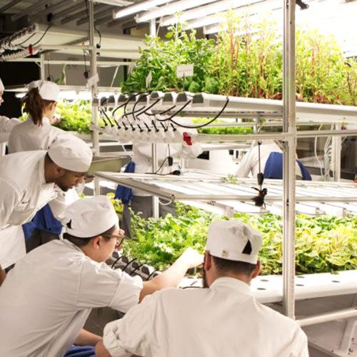 cover_enkarterri open lab_ agrofood_social innovation _ agro innovation_urban rural gap_rural innovation_food innovation_DOT_design_bilbao_bizkaia